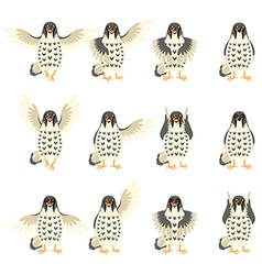 Set of Falcon Flat icons vector image