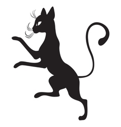 black cats in the profile vector image