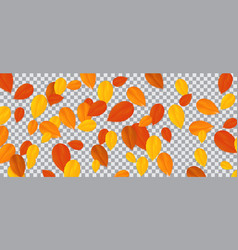 Set of multi-colored autumn leaves on transparent vector
