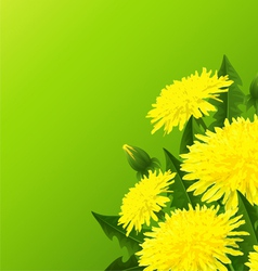 Yellow dandelion flower vector