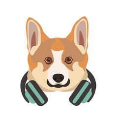 basenji breed dog portrait with headphones on neck vector image