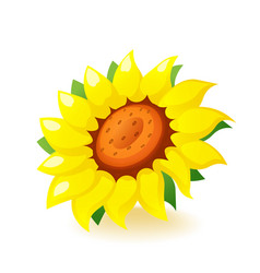 bright yellow sunflower icon blossom isolated on vector image