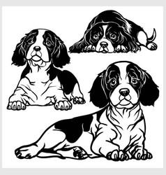 cavalier king charles spaniel - set vector image