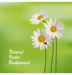 Natureal summer background vector image