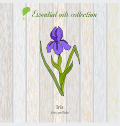 pure essential oil collection iris wooden vector image