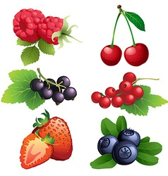 Ripe strawberry raspberry cherry blackberry black vector image