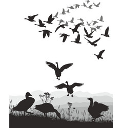geese - winged migration vector image vector image