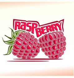 raspberry still life vector image