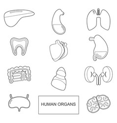 human organs in outline style icons set vector image