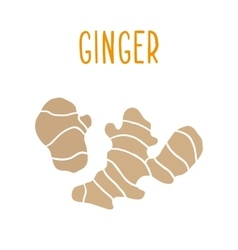 Ginger root isolated on white vector