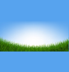 green grass border and isolated blue background vector image