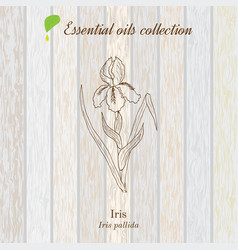 Pure essential oil collection iris wooden vector