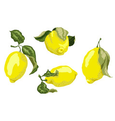 set with juicy lemon fruits in graphic vector image