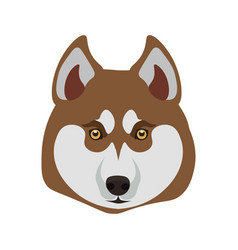 Siberian husky breed close up dog isolated vector
