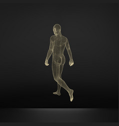 Walking man 3d human body wire model vector