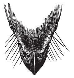Bird beak vintage vector