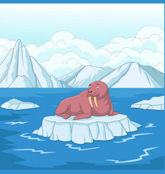Cartoon walrus on ice floe vector