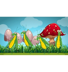 Four grasshoppers on the lawn vector image