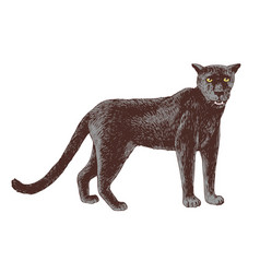 hand drawn black puma isolated on white background vector image