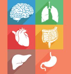 silhouette human internal organ body parts stencil vector image