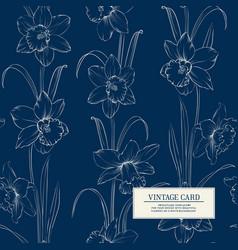 botanical of daffodil vector image