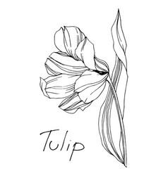 Tulip floral botanical flower black and vector