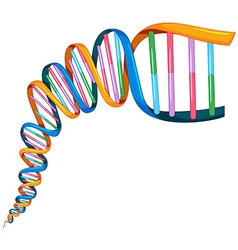 DNA strand in many colors vector image
