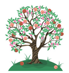 Apple tree isolate on a white background vector