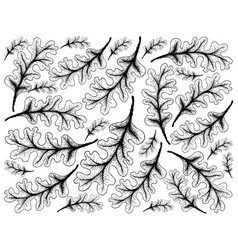 hand drawn background of autumn oak leaves vector image