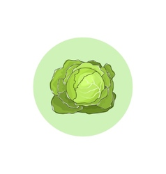 Icon white cabbage vegetable vector image