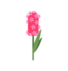 pink hyacinthus with small flowering isolated vector image