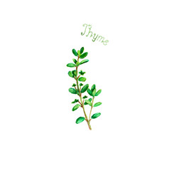 Thyme herb spice isolated on white background vector