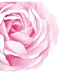 watercolor rose flower isolated vector image