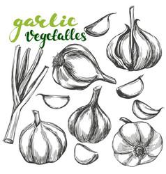 garlicvegetable set hand drawn vector image vector image