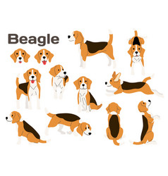 Beagledog in actionhappy dog vector
