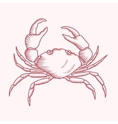 Detailed drawing of a sea crab vector