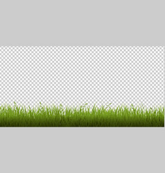 green grass border isolated white background vector image