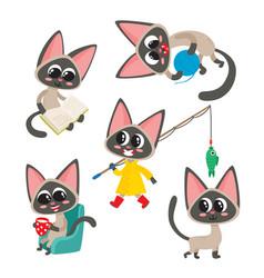 Set cartoon siamese funny cats isolated vector