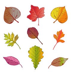 set of bright autumn leaves vector image