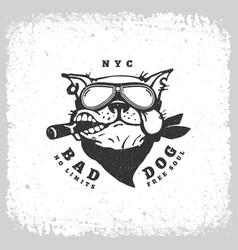 bad dog vector image vector image