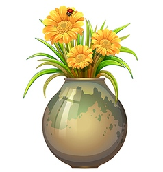 A plant in a pot with blooming flowers vector