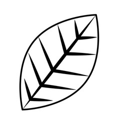leaf natural foliage icon image vector image