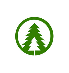 tree spruce vector image