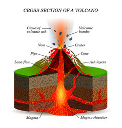 volcano igneous eruption in the cross section vector image