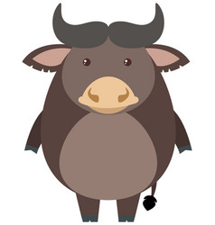 gray buffalo on white background vector image vector image