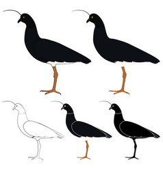 Anhuma bird in profile view vector