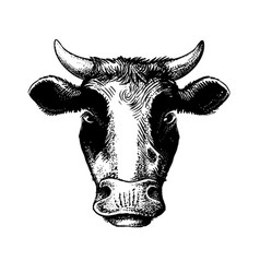 cow head black on white sketch style vector image