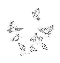 flock urban wild pigeons pecks seeds set vector image