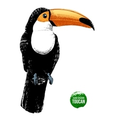 hand drawn toucan vector image