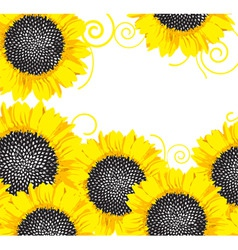 sunflower border vector image
